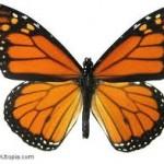 butterfly1-150x150